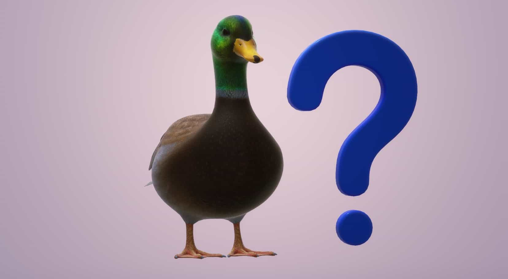 duck with question mark